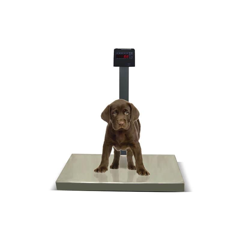 Balança Eletrônica Modelo DP Ramuza PET 200 Kg
